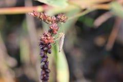 Fleur sauvage avec l'insecte Image libre de droits