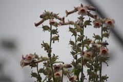 Fleur sauvage chinoise Photographie stock libre de droits