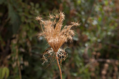 Fleur sauvage de Beautifil dans la forêt Images libres de droits