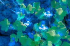 Fleur sauvage de muflier, illustration colorée photographie stock libre de droits