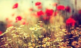 Fleur sauvage de vintage Images libres de droits