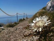 Fleur sauvage en Croatie images libres de droits