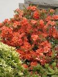 Fleur sauvage rouge