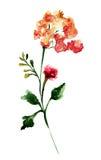 Fleur sauvage stylisée Image libre de droits