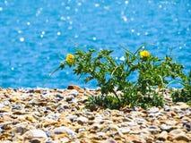 Fleur sauvage sur des pierres photo libre de droits