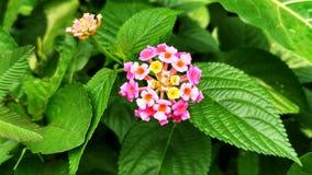 Fleur scénique Photographie stock