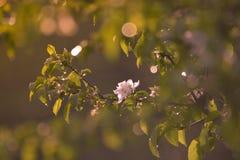 Fleur sensible après la pluie Image stock