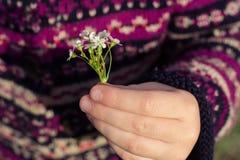 Fleur sensible chez les mains des enfants Image stock
