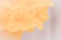 Fleur sensible des fleurs, belle, détail Photographie stock libre de droits