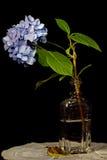 fleur simple Photographie stock
