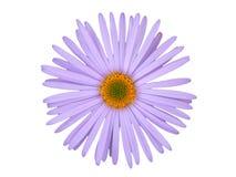 Fleur simple image stock