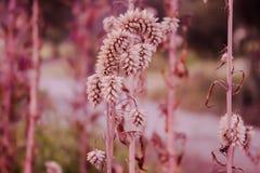 Fleur simple Images libres de droits