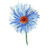 Fleur simple de marguerite bleue d'illustration Photo stock