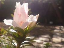 Fleur simple pour le fond image libre de droits