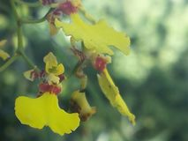 Fleur simple pour le fond photo libre de droits
