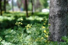Fleur sous l'arbre photographie stock libre de droits