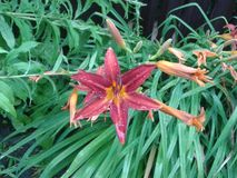 Fleur sous la pluie Photos stock