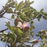 fleur sous le ciel Photographie stock libre de droits
