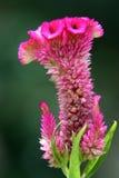 Fleur spéciale Photos libres de droits