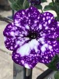 Fleur stupéfiante de galaxie photographie stock