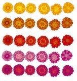 Fleur stylisée décorative de souci illustration stock