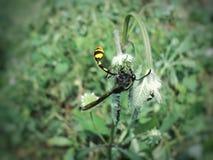 Fleur-succion du scarabée dans le jardin photos stock