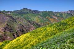 Fleur superbe colorée au canyon de corral photographie stock libre de droits