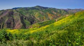 Fleur superbe colorée au panorama de canyon de corral images stock