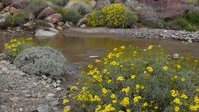 Fleur superbe de Borrego Springs clips vidéos