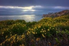 Fleur superbe de la Californie de 2017, Rancho Palos Verdes image libre de droits