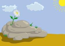 Fleur sur des pierres Photos libres de droits
