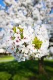 Fleur sur l'arbre Images stock