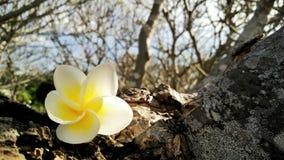 Fleur sur l'arbre Photo stock