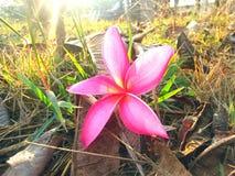 Fleur sur l'herbe Image stock