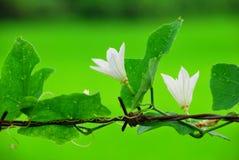 Fleur sur la bavure photographie stock libre de droits