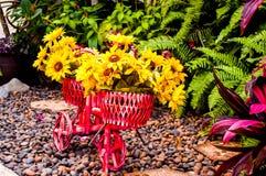 Fleur sur la bicyclette Photographie stock libre de droits