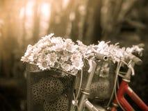 Fleur sur la bicyclette Images stock