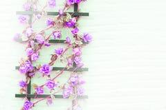 Fleur sur la brique de mur Photos libres de droits