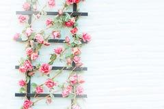 Fleur sur la brique de mur Photo stock