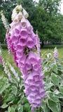 Fleur sur la fleur Photos libres de droits