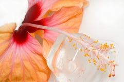 Fleur sur la glace Photographie stock libre de droits