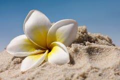 Fleur sur la plage Photos libres de droits
