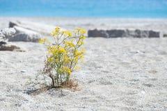 Fleur sur la plage Images stock