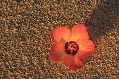 Fleur sur la plage Photo libre de droits