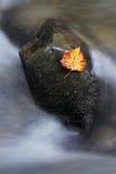 Fleur sur la roche Image libre de droits