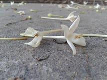 Fleur sur la route Images stock