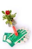 Fleur sur la truelle de jardinage Photos stock
