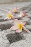 Fleur sur le chemin Image libre de droits