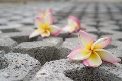 Fleur sur le chemin Photographie stock libre de droits