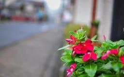 Fleur sur le chemin latéral Image stock